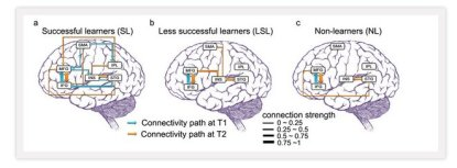 brain activity of language learners and non learners