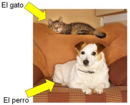 El perro el gato