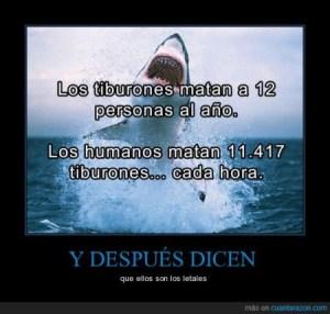 Los tiburones son letales