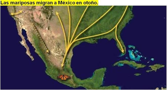 las-mariposas-migran-a-mexico