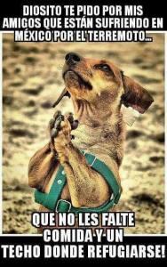Que les cuide a los perros en México